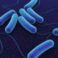 News, e-coli